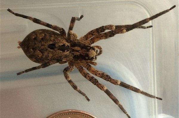 spider-fucking