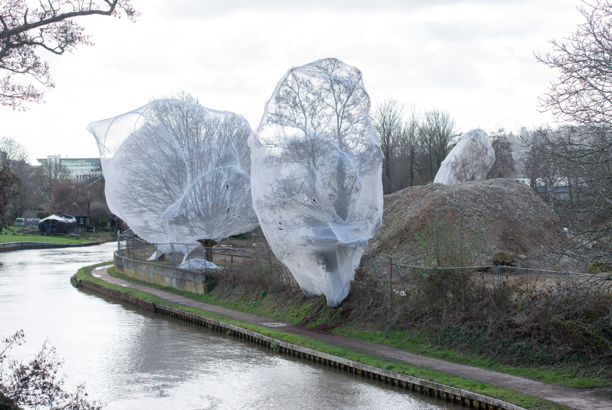 Similar nets have been placed on trees at many other sites in the UK. Credit: SWNS