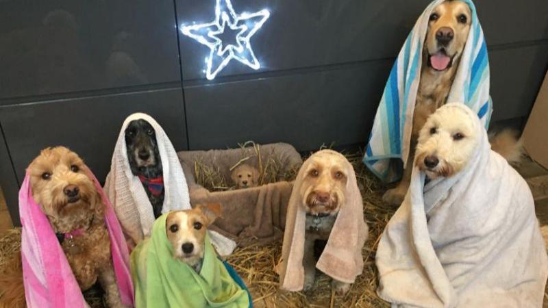 Dogs Star In The Best Nativity Scene We've Ever Seen