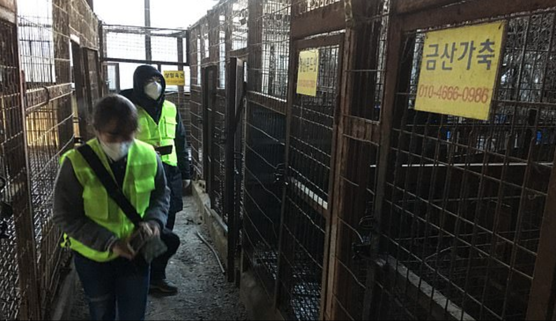Cages at the Taepyeong-dong dog meat slaughterhouse in Seongnam city. Credit: Humane Society International