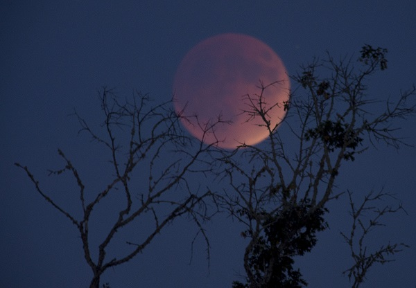 The Super Blood Moon of 2015. Credit PA