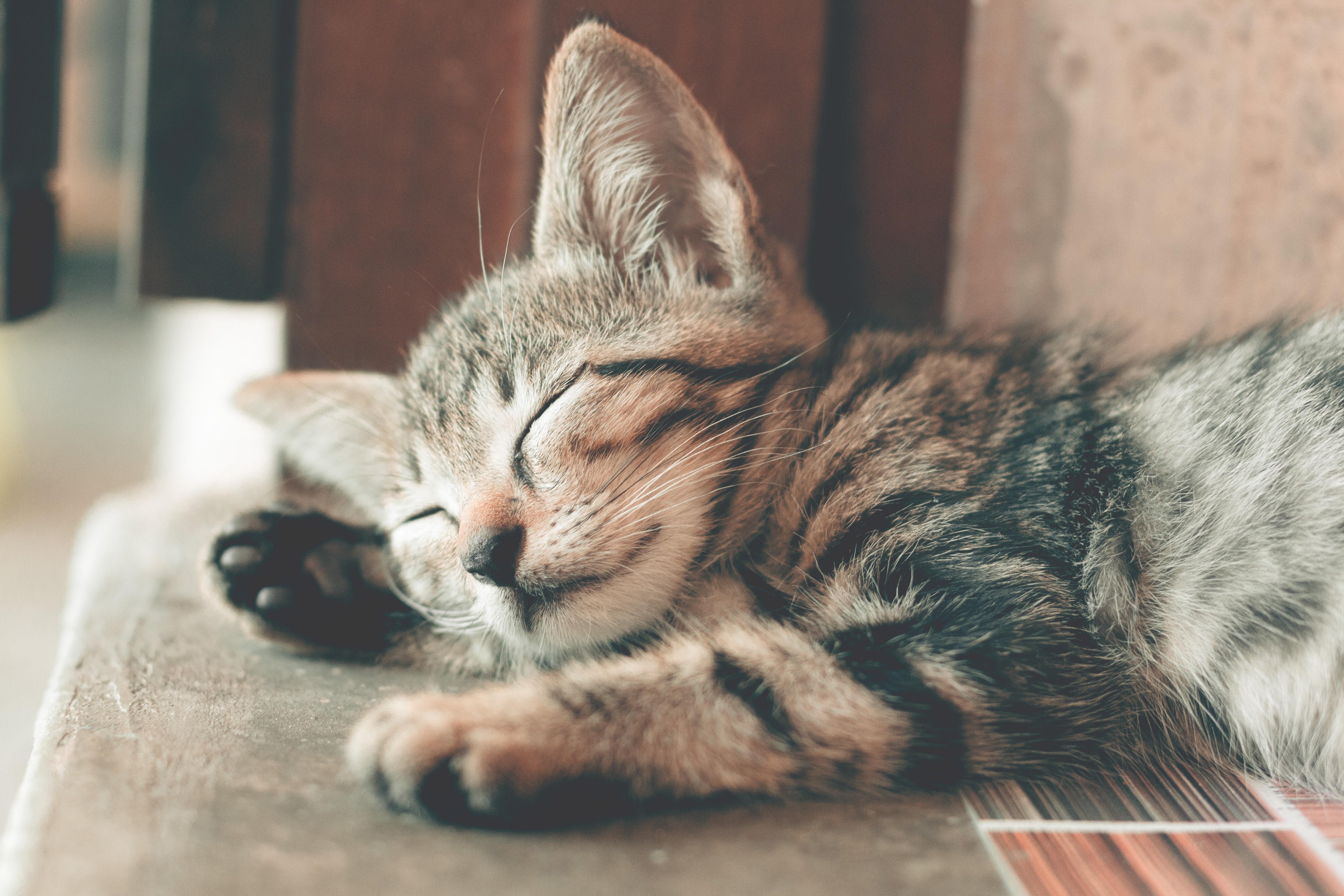 Luna and Bella top the list for cats. (Credit: Pexels)