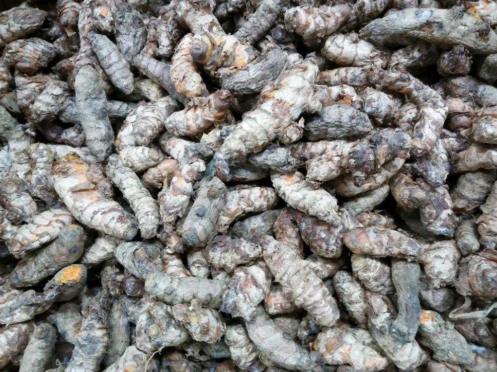 Turmeric root. Credit: PA