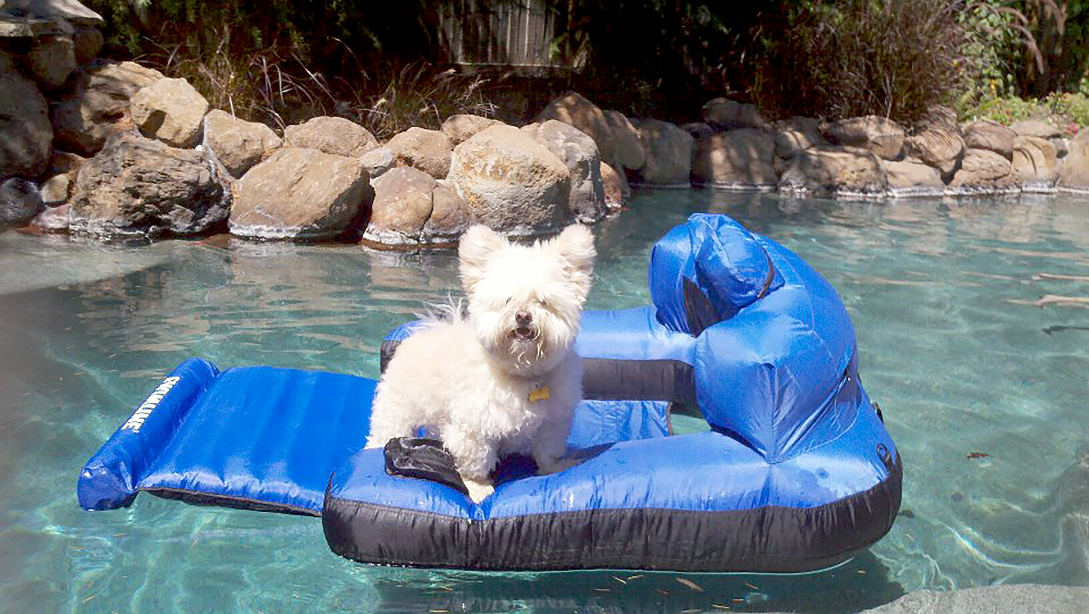 Gizmo loving life on a pool inflatable. Credit: Kennedy News and Media