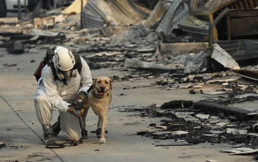 Dogs have been assisting search teams in Paradise, California. Credit: PA