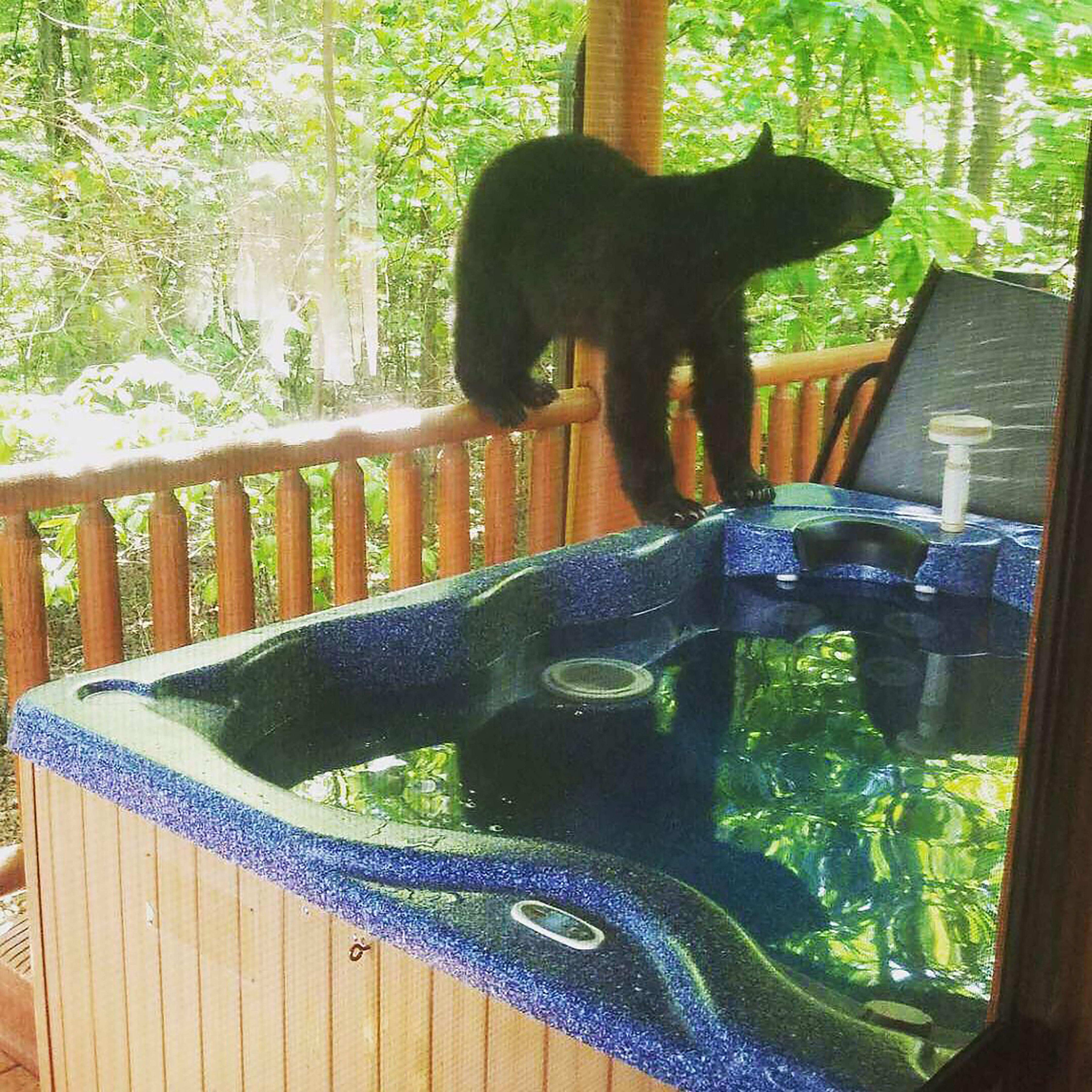 The cute bear cubs enjoyed playing about in the hot tub. Credit: The Mega Agency