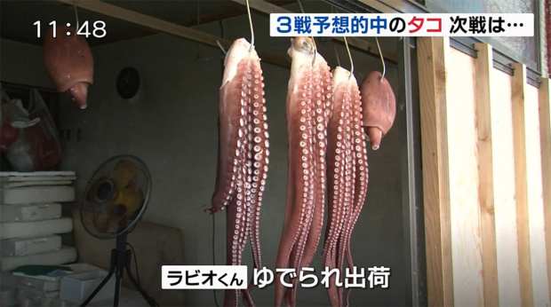 Octopus that predicted Japan's World Cup outcomes killed and sold as food