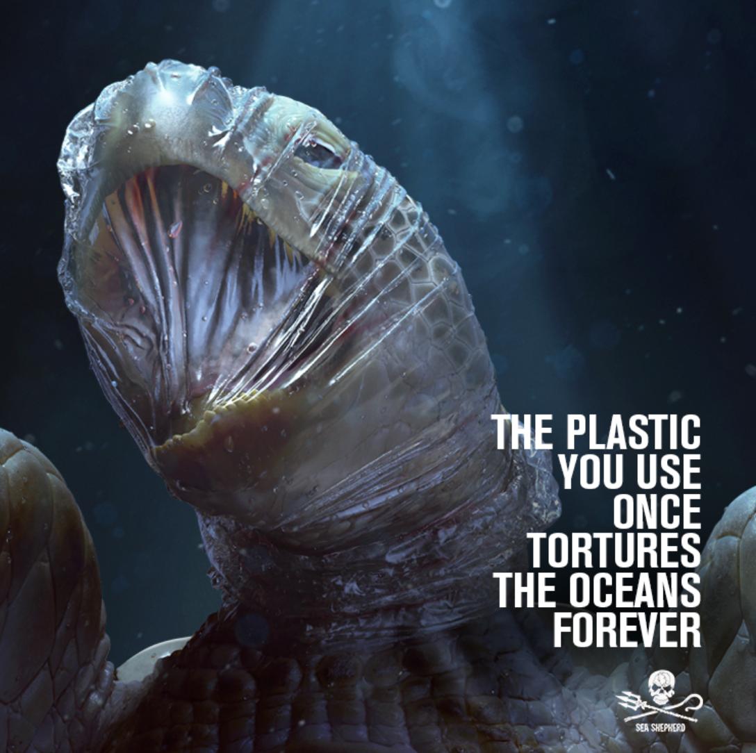 Credit: Sea Shepherd