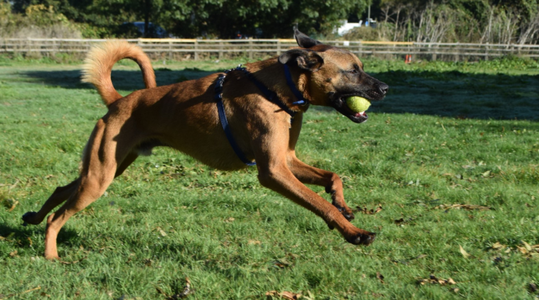 Timmy also knows lots of tricks. Credit: Battersea Dogs and Cats Home