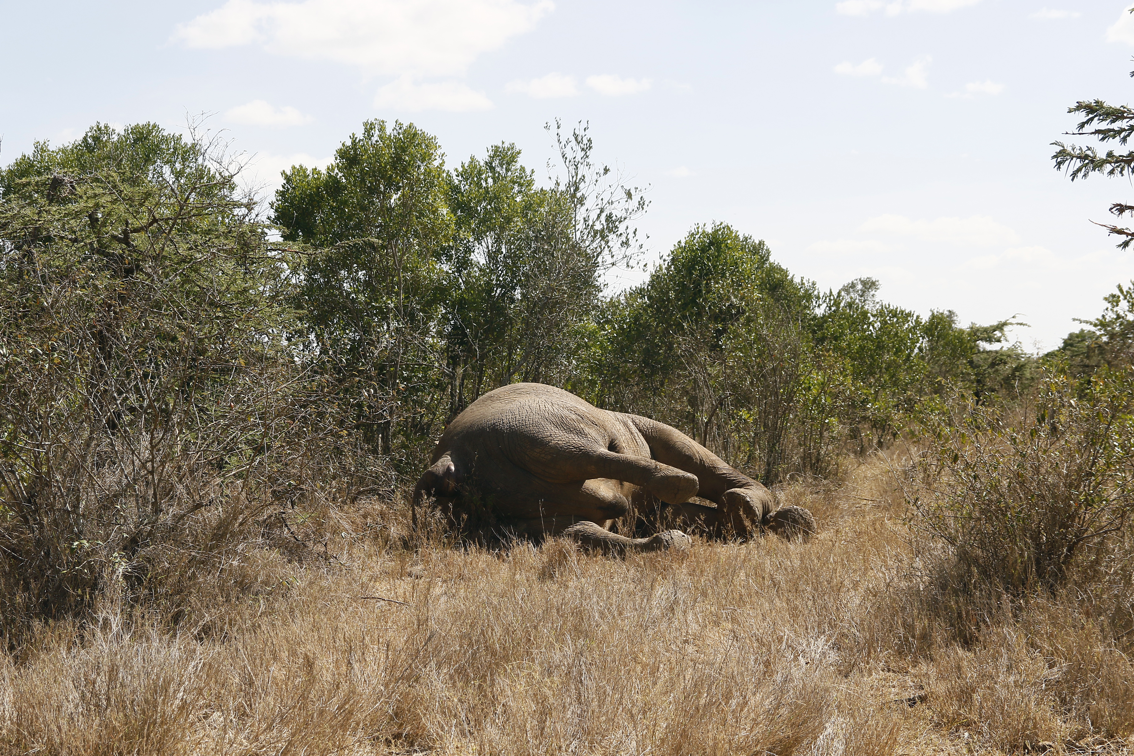 There are only about 400,000 elephants left in Africa. Credit: PA