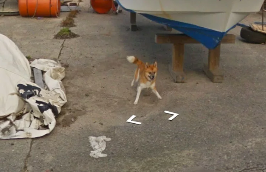 The dog gave chase to the cameraman Credit: Google