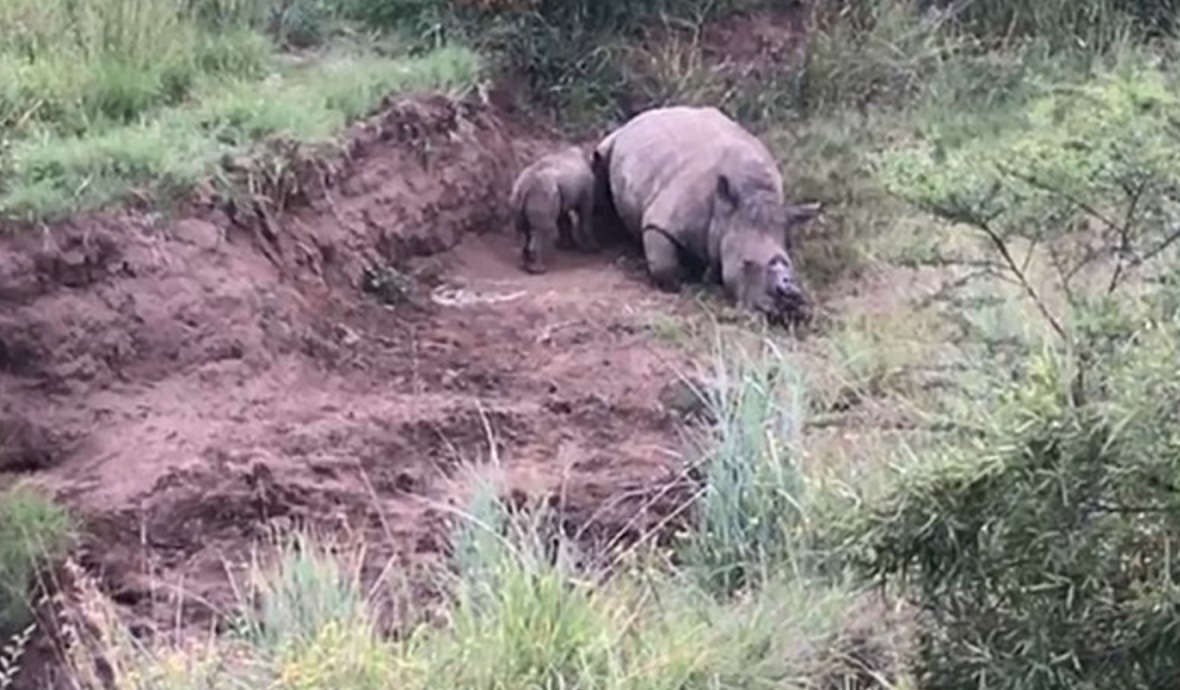 Credit: Rhino 911/Magnus News Agency