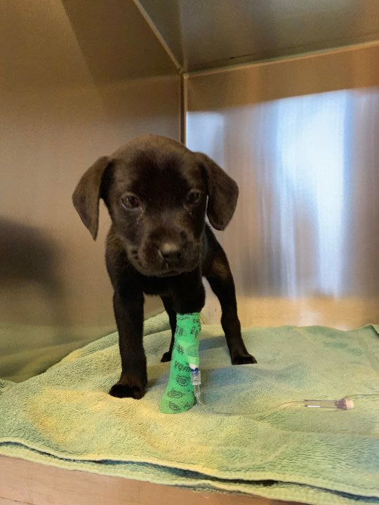 Emerson the pup. Credit: North Florida Rescue
