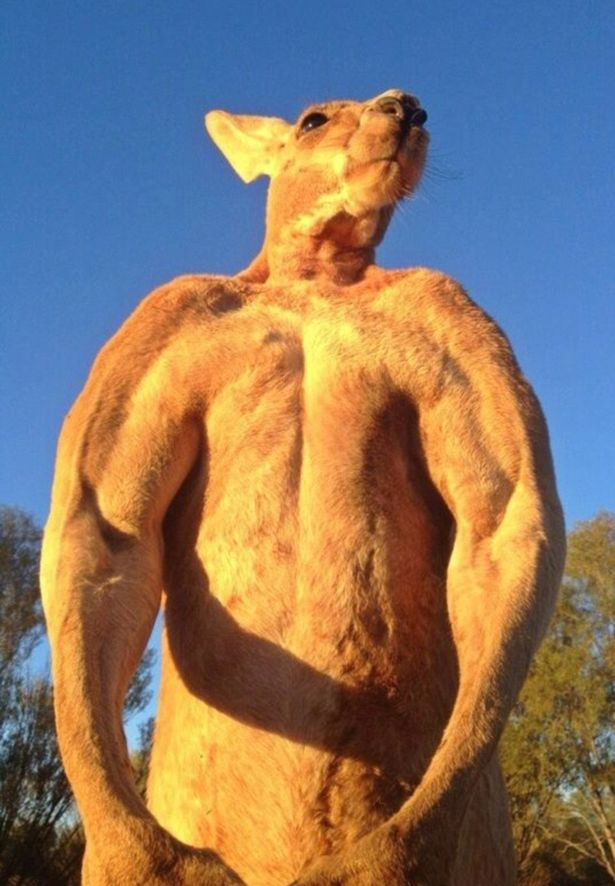 Roger the kangaroo has died aged 12. Credit: Facebook/Kangaroo Sanctuary Alice Springs