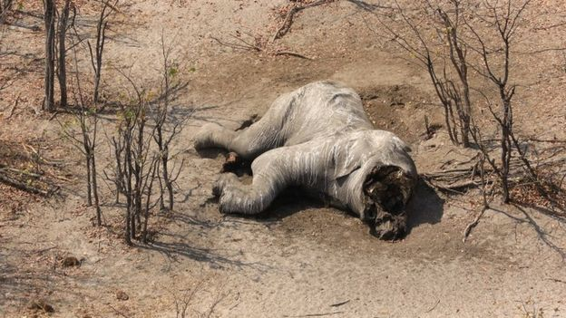 Carcasses of almost 90 elephants found in Botswana