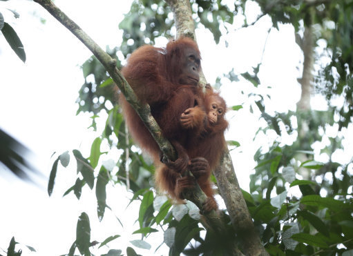 Orangutans aren't the only victim of palm oil. Credit: PA Images