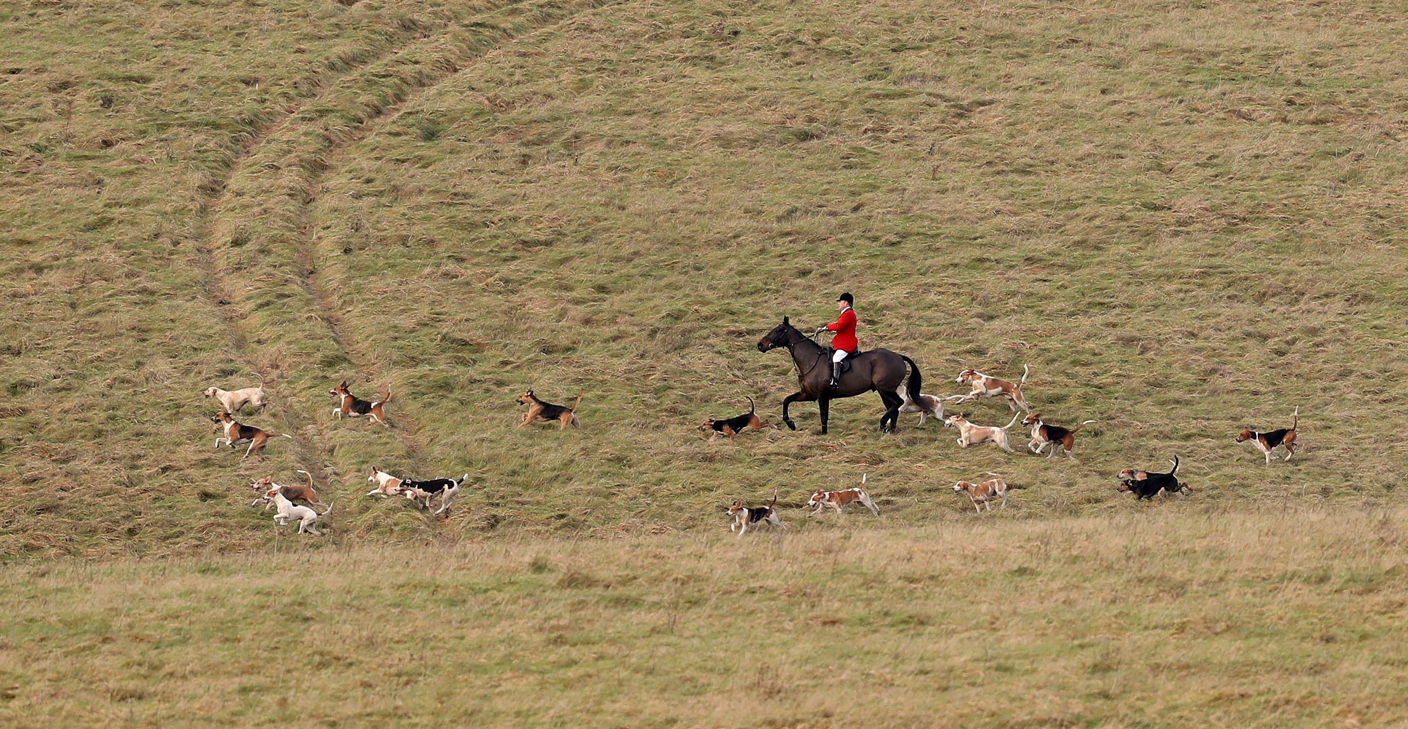 Police investigate allegations of illegal Boxing Day fox hunts