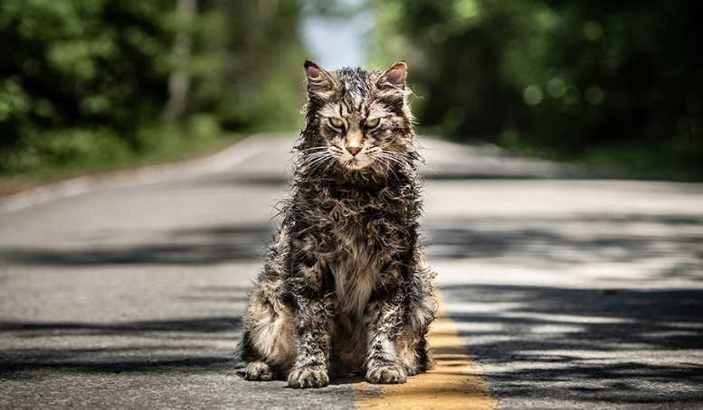 'Pet Sematary' star Leo the cat dies a month after film's release