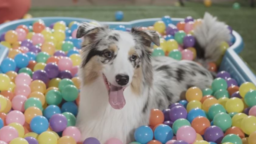 This Puppy Cuddle Corner Is A Dog Lover's Dream Day Out