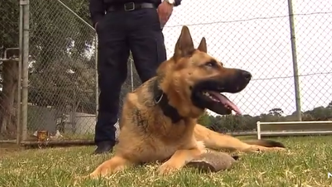 South Australian Police Dog Who Caught Nearly 60 Criminals Retires After Four-Year Career