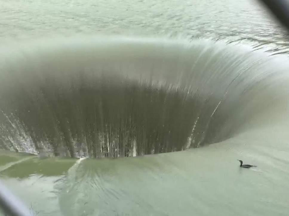 Unlucky Duck Sucked Into Lake Berryessa 'Glory Hole'