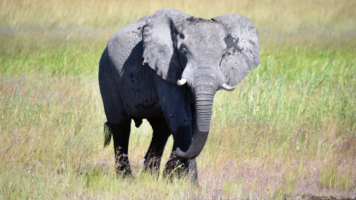 ​White House Allows Hunters To Import Heads of Killed African Elephants