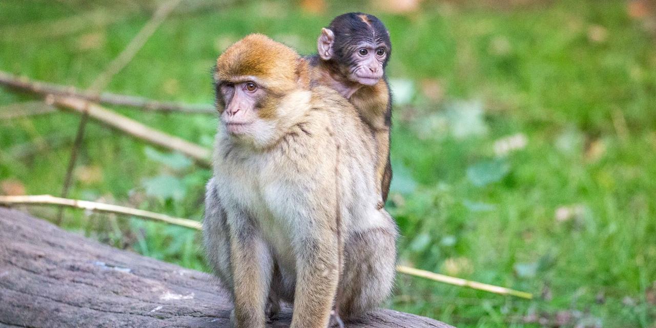 Credit: Woburn Safari Park
