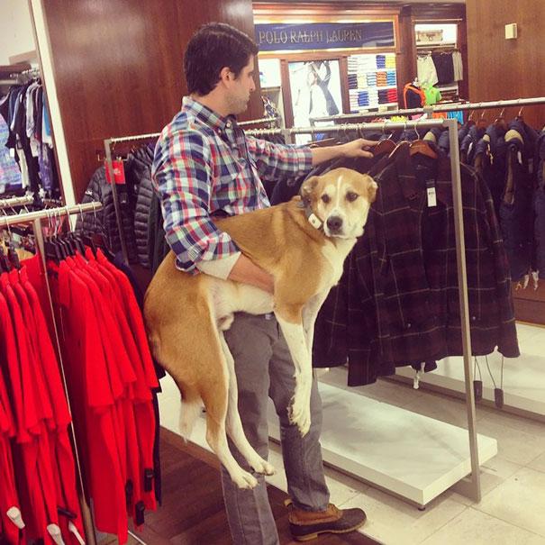 If men took their dog's shopping the way women do...