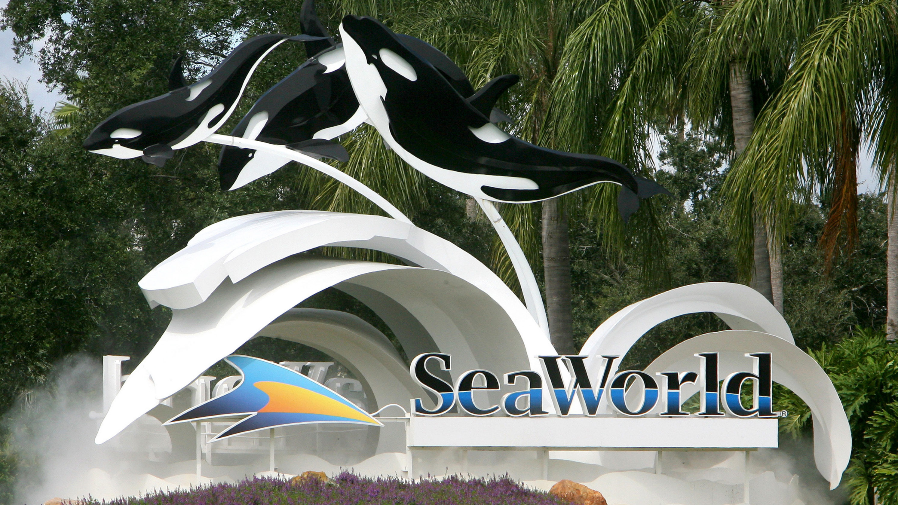 Thomas Cook To Stop Selling Tickets To SeaWorld Over Animal Welfare Concerns