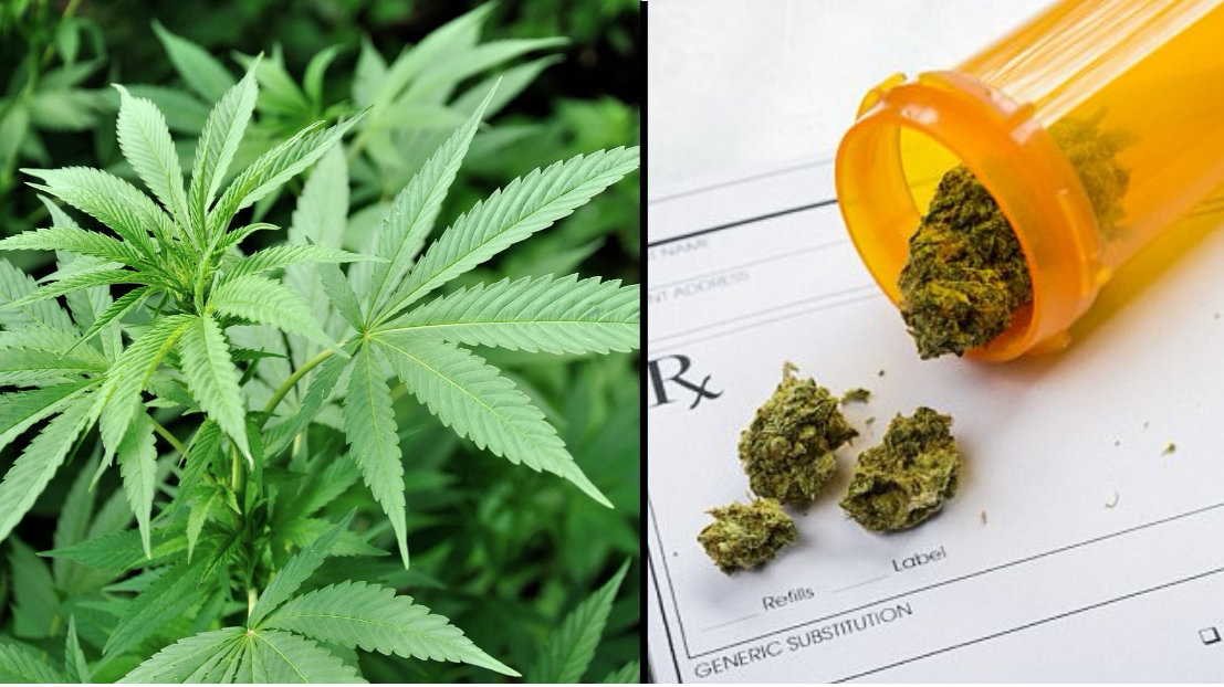 WHO Recommends Medical Marijuana Should Not Be A Scheduled Drug