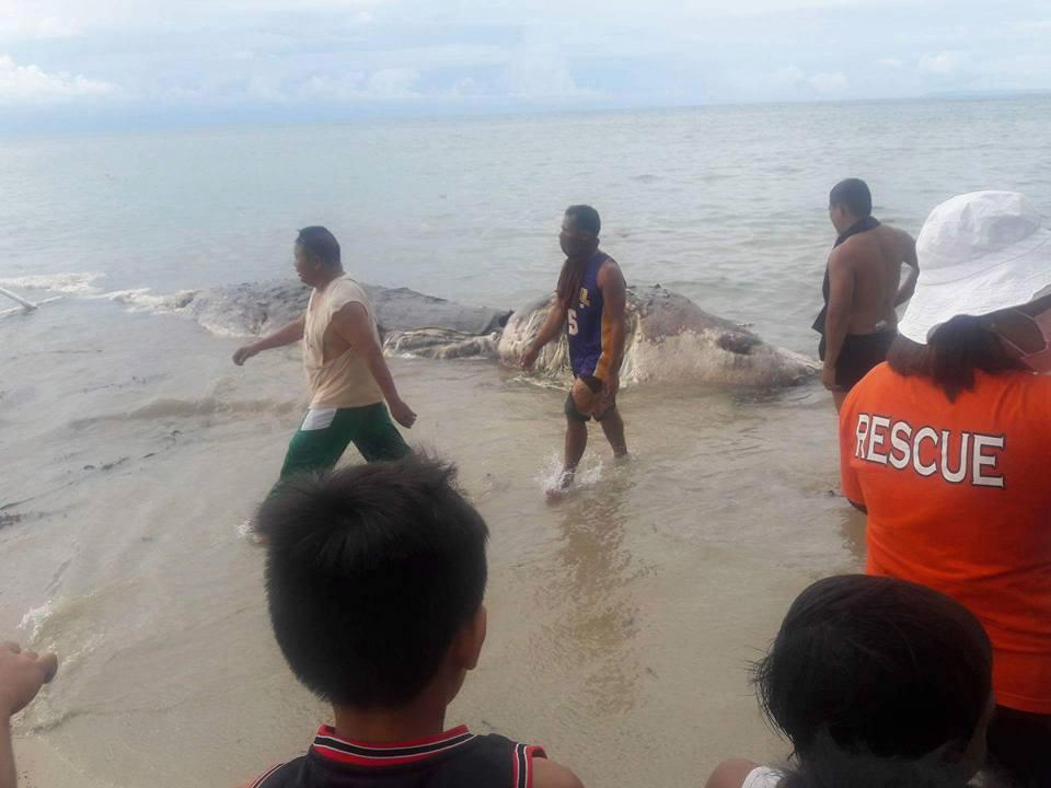 Mysterious dead sea beast washes up on beach in the Philippines