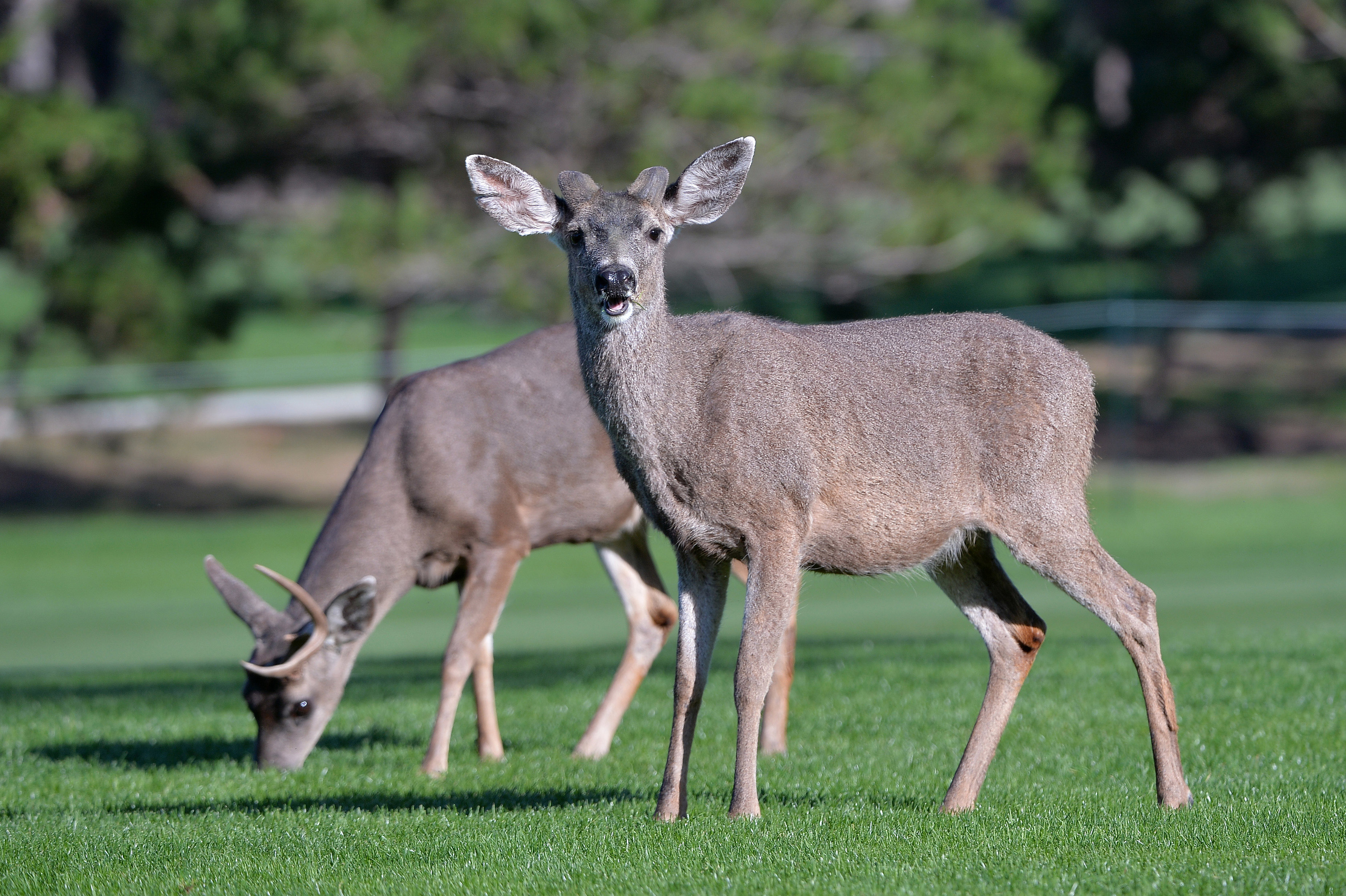 Fears Zombie Deer Disease Could Spread To Humans