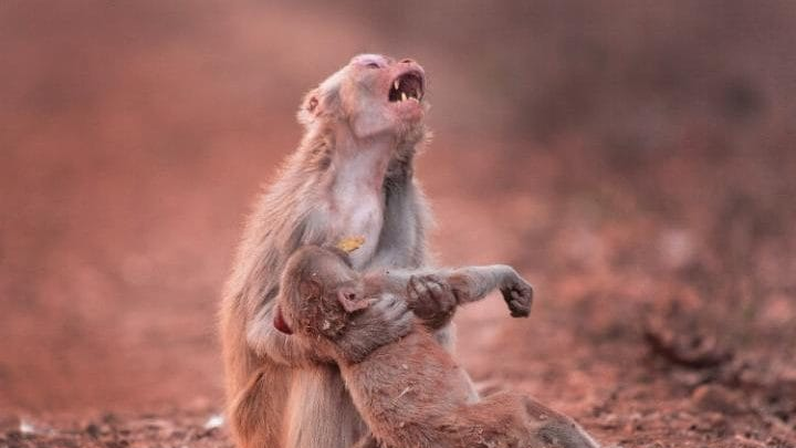 Photo Captures Heartstopping Moment A Mother Cradles Her Collapsed Child