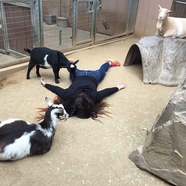 In the goat pen at San Diego Zoo. Credit: Instagram/Stefdies