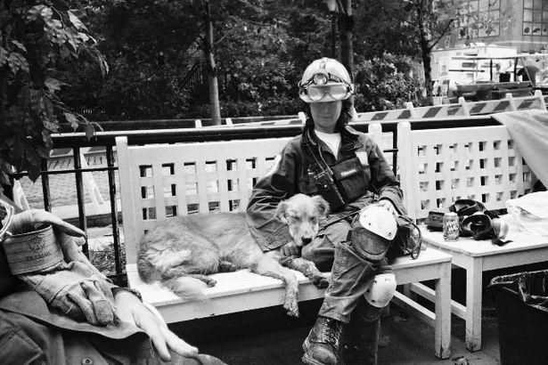 Kisah Anjing-anjing Penyelamat dalam Tragedi 9/11, Mati Sebagai Pahlawan