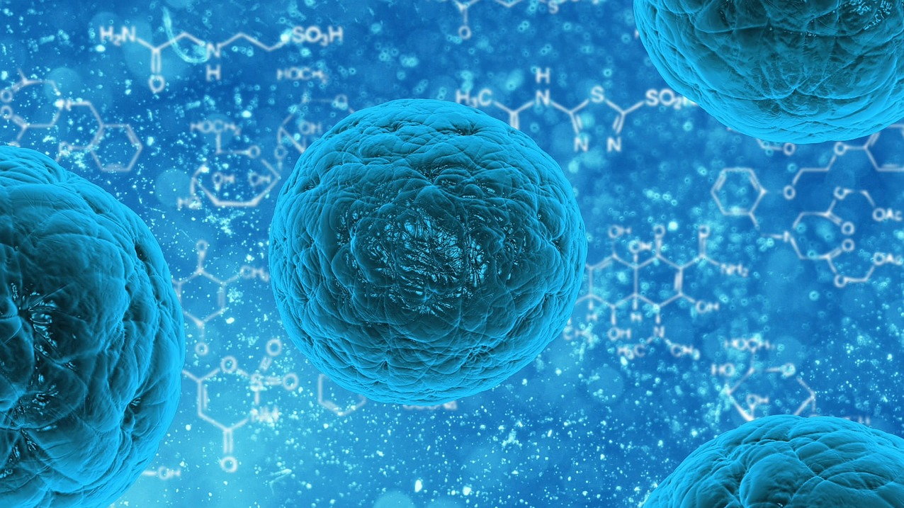 Scientists Use Stem Cells To Create Embryo Without Sperm Or Egg