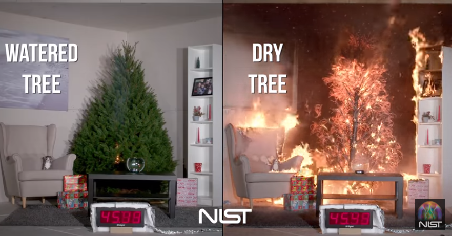 The dry tree was engulfed in flames within a mater of seconds. Credit: NIST/Youtube