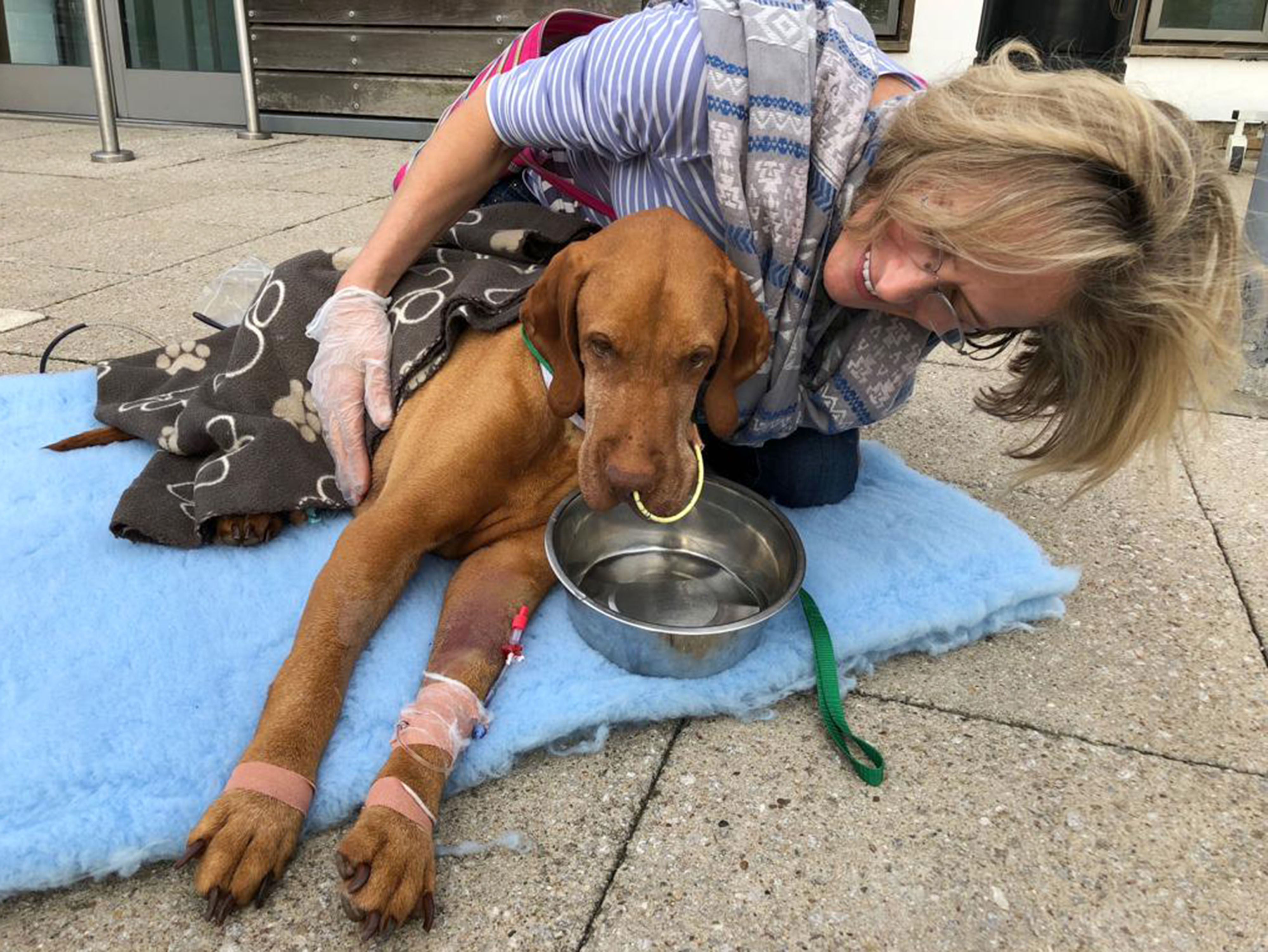 Ruby's owners spent £10,000 trying to save her. Credit: Caters