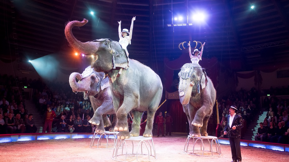 Irish Government Bans Use Of Wild Animals In Circuses