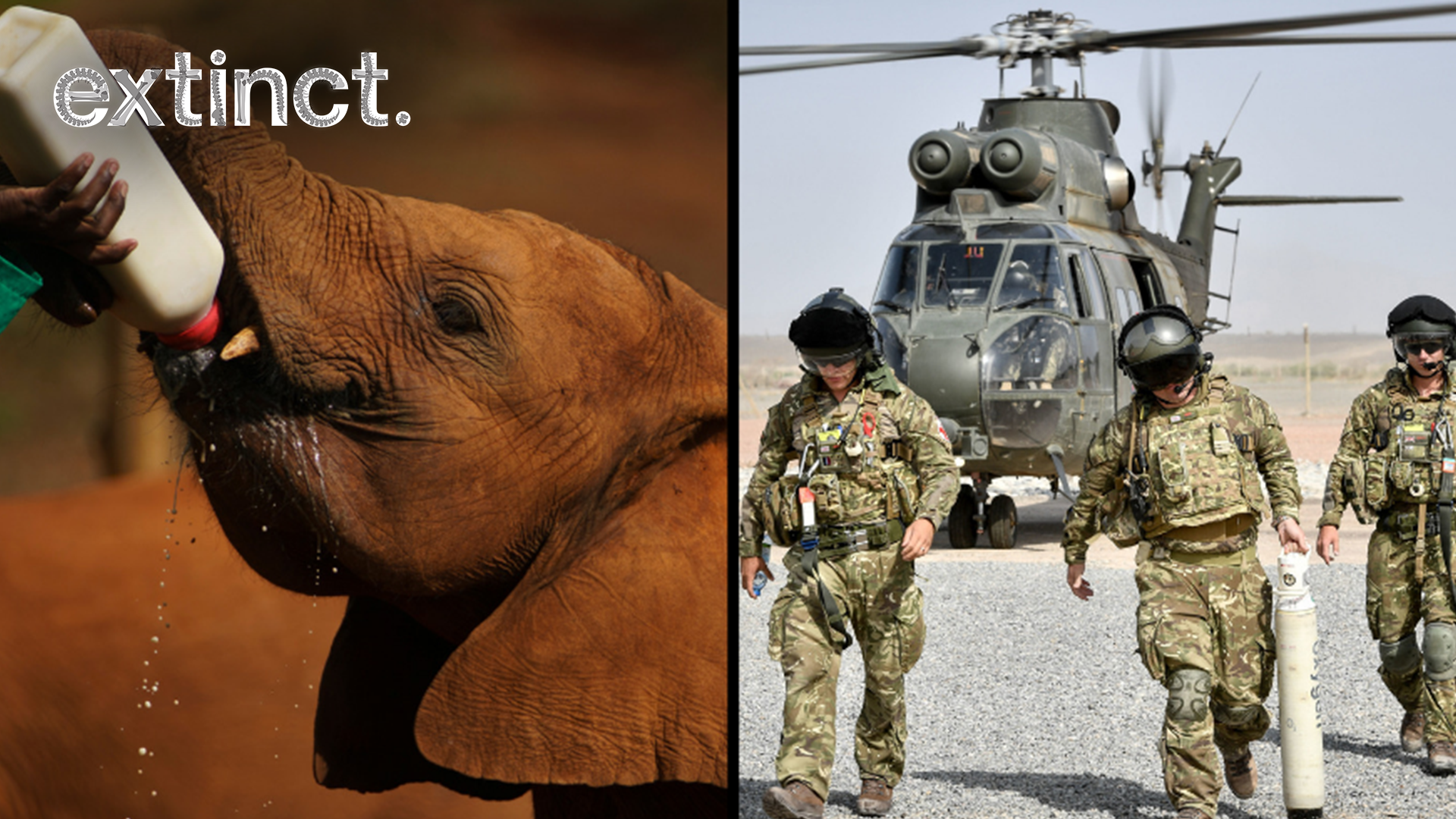 UK Soldiers Will Be Sent To Africa To Help End Animal Poaching