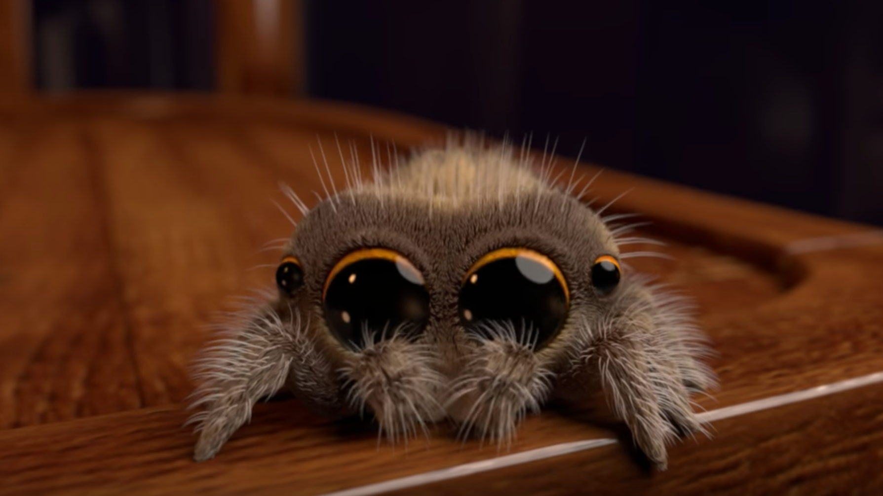 Hate Spiders? Prepare To Have Your Mind Changed