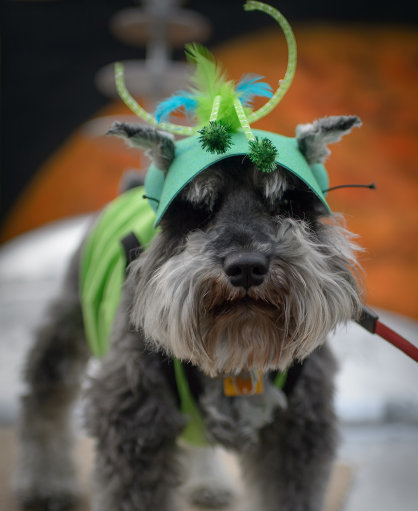 This would be the best disguise - the aliens are actually dressed as dogs to fool us. Credit: PA