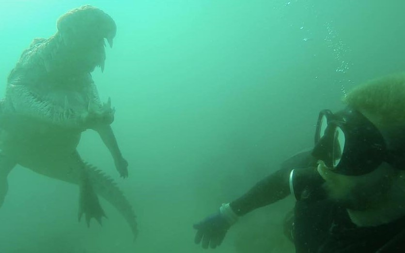 Beau swimming with a crocodile