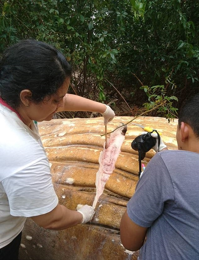 Dead Humpback Whale Mysteriously Turns Up In The Amazon