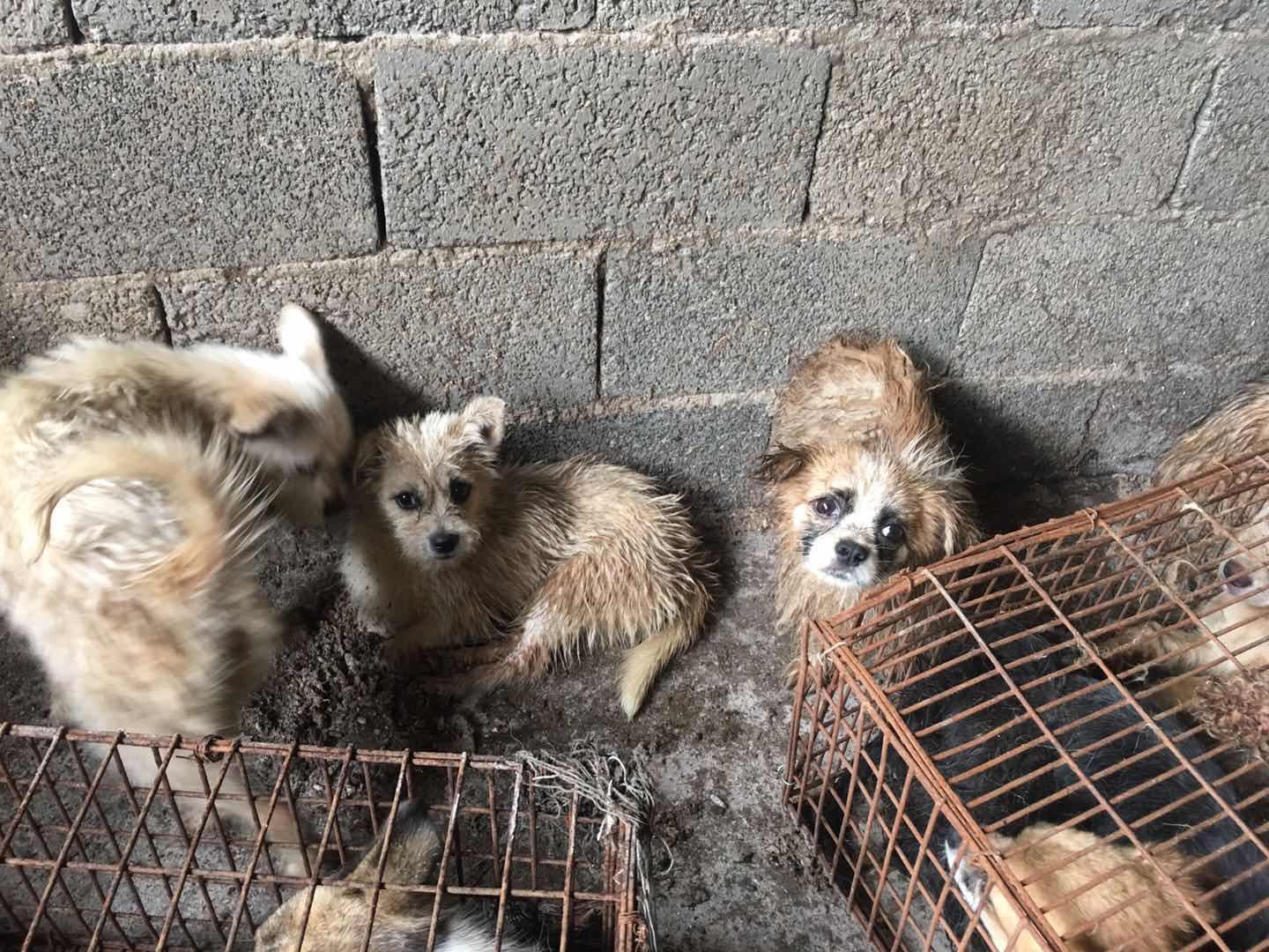 1 5 Million People Sign Petition To Ban China's Yulin Dog Meat