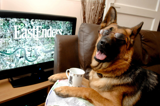 Does this dog really like watching EastEnders? Credit: PA