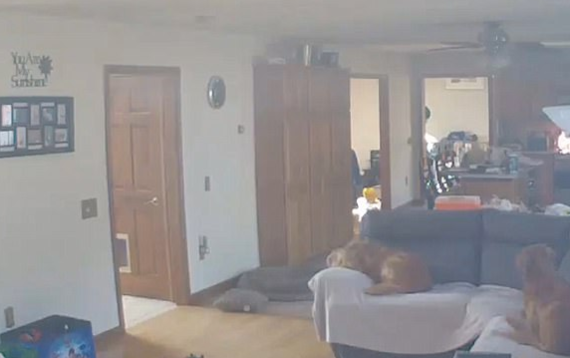 Caught on camera: Dog starts fire