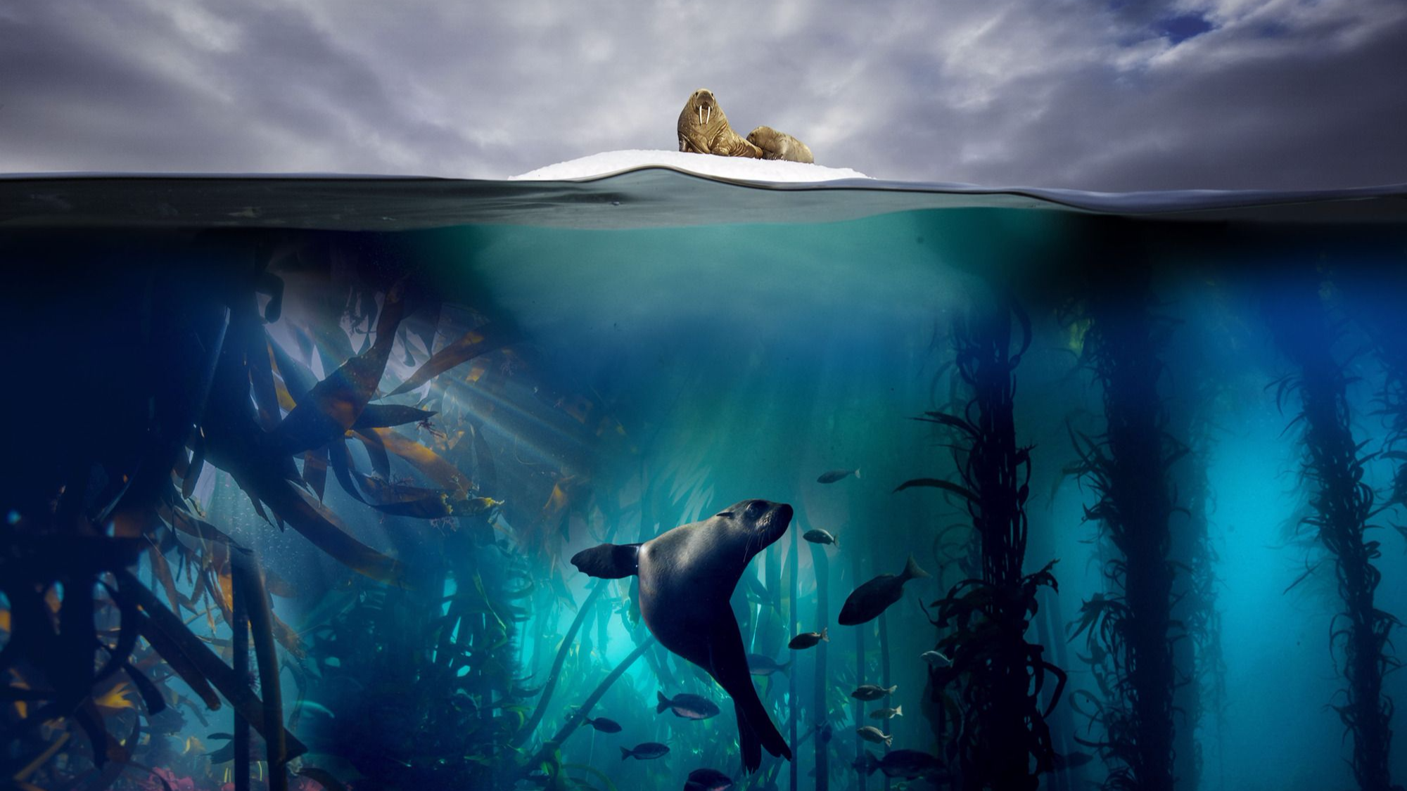 'Blue Planet II' Has Become The Most Watched TV Show Of 2017
