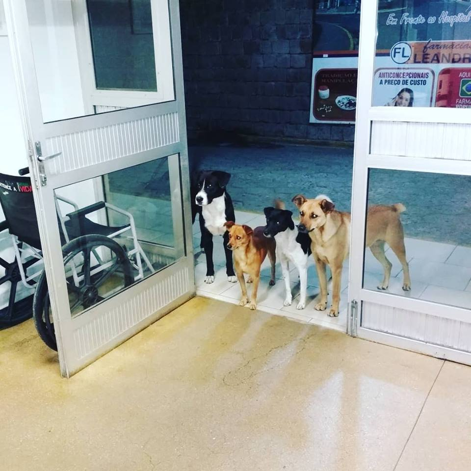 César's dogs waited for him by the door at the hospital and they are well adorable. Credit: Cris Mamprim