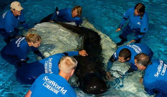 Fredi was rescued in 2011 after a mass stranding at Florida Keys. Credit: SeaWorld Orlando